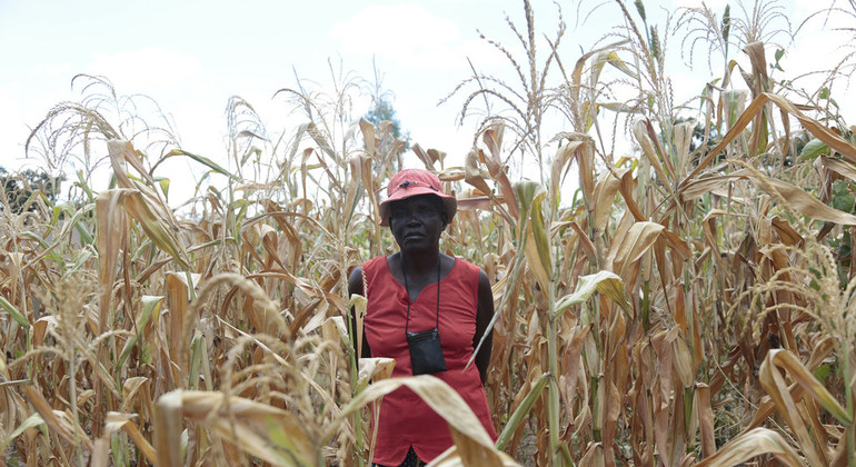 Zimbabwe: 2.6m Villagers Facing Severe Food Shortages - Report