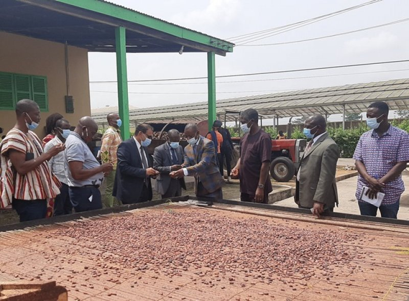 Illegal mining biggest threat to the cocoa industry - CRIG boss