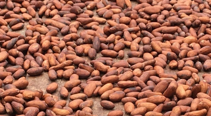 EU and Ghana hold second round of cocoa talks as Cote D Ivoire appeals legislation flexibility